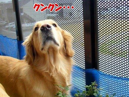 SANY0014_20090316175024.jpg