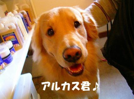 SANY0015_20090103185722.jpg