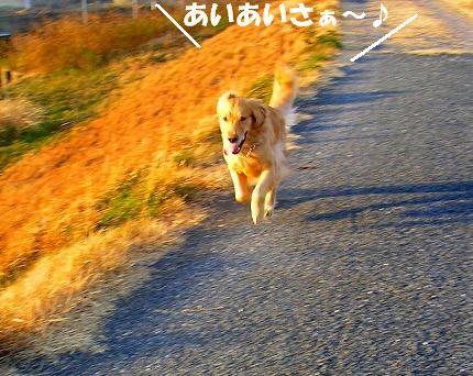 SANY0015_20090108173644.jpg