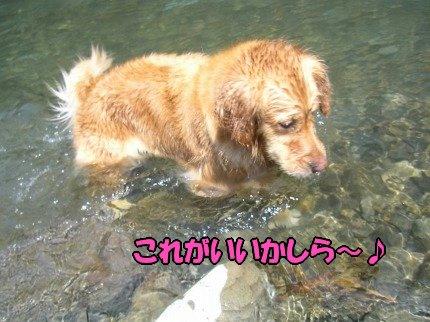 SANY0015_20090626085644.jpg