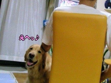 SANY0015_20090808100203.jpg