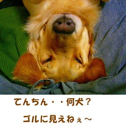 SANY0016_01.jpg