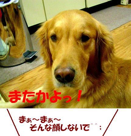 SANY0016_20081226114759.jpg