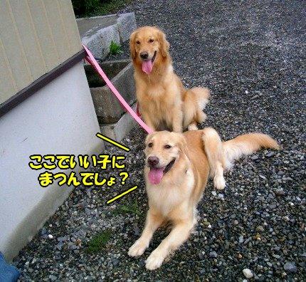 SANY0016_20090802215113.jpg