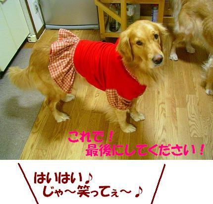 SANY0017_20081226114832.jpg
