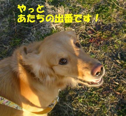 SANY0017_20090128185504.jpg