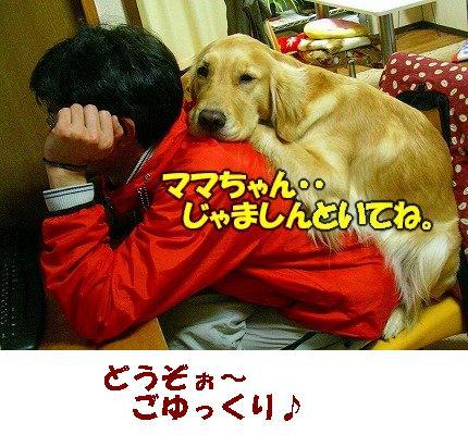 SANY0017_20090302201628.jpg