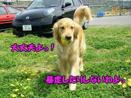 SANY0017_20090423062123.jpg