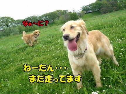 SANY0017_20090428050838.jpg
