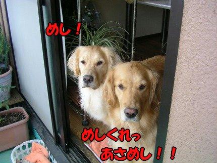 SANY0017_20090603031654.jpg