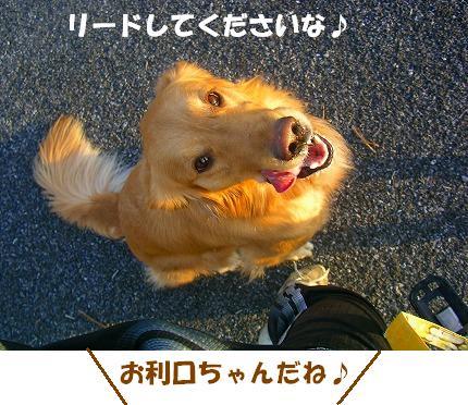 SANY0018_20090108173701.jpg