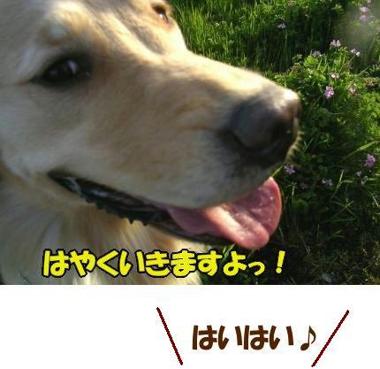 SANY0018_20090317185312.jpg