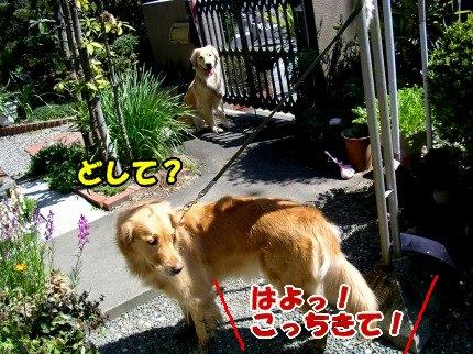 SANY0018_20090402150620.jpg