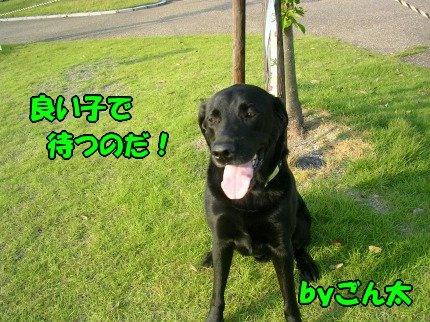 SANY0018_20090618213158.jpg