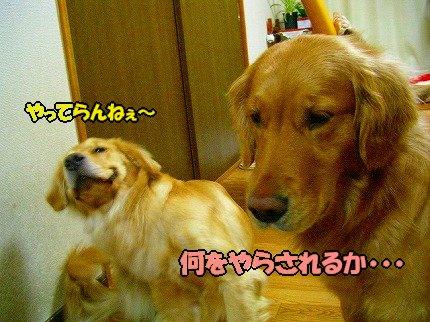 SANY0019_01.jpg