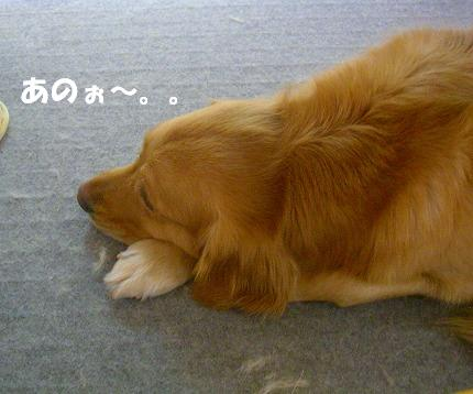 SANY0019_20090113211946.jpg