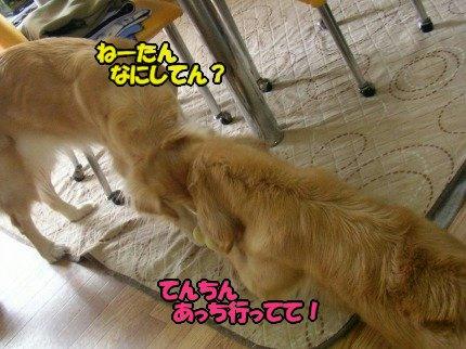 SANY0019_20090325141353.jpg