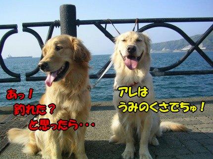 SANY0019_20090430005444.jpg
