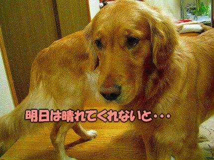 SANY0020_01.jpg