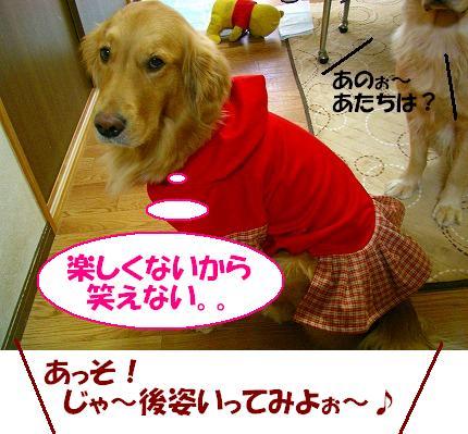 SANY0020_20081226114843.jpg
