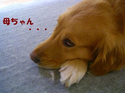 SANY0020_20090113211955.jpg