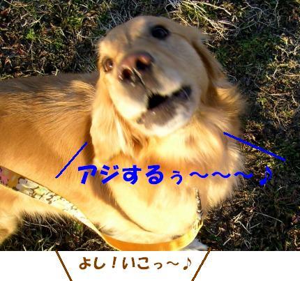 SANY0020_20090128185545.jpg