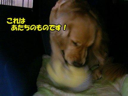 SANY0020_20090325141413.jpg