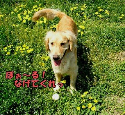 SANY0020_20090410200852.jpg