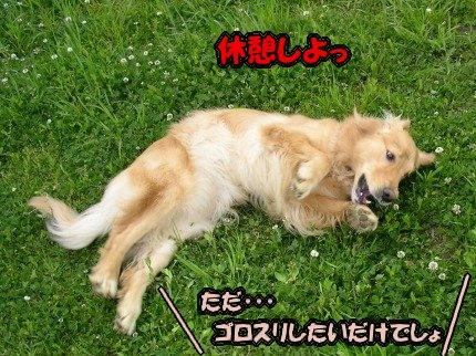 SANY0020_20090428050838.jpg