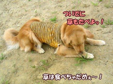 SANY0020_20090725102517.jpg