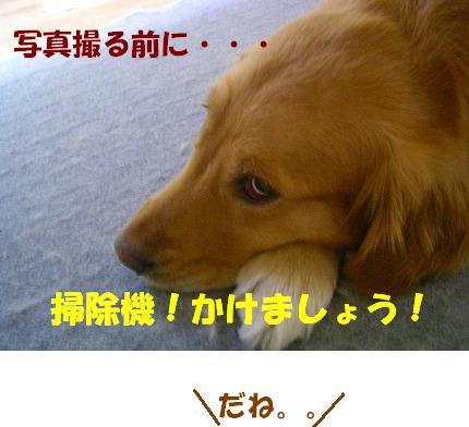 SANY0021_20090113212003.jpg