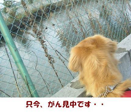 SANY0021_20090221225224.jpg