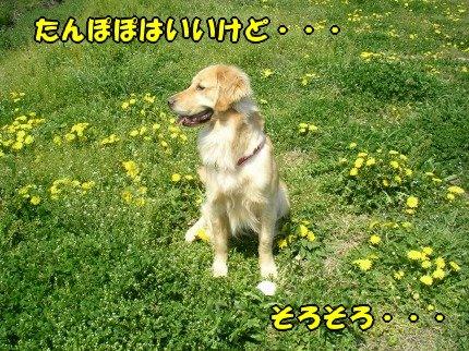 SANY0021_20090410200843.jpg