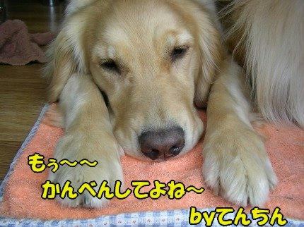 SANY0021_20090603031654.jpg
