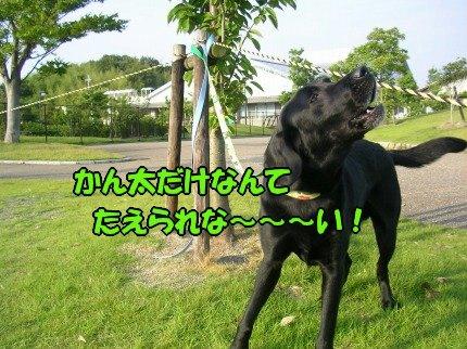 SANY0021_20090618212835.jpg