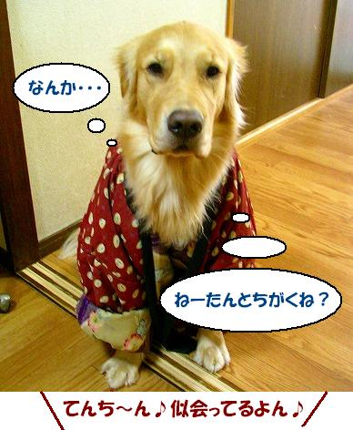 SANY0022_20081226114922.jpg