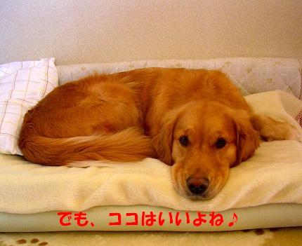 SANY0023_20090123172019.jpg