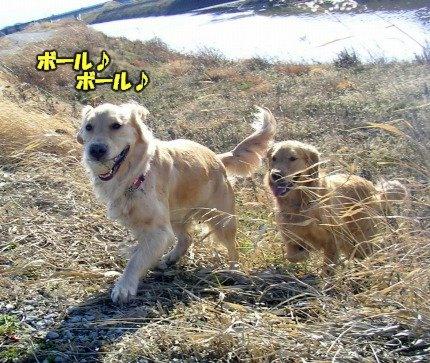 SANY0023_20090209001638.jpg