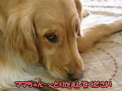 SANY0023_20090325141405.jpg