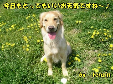 SANY0023_20090410200823.jpg