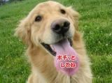SANY0023_20090428012039.jpg