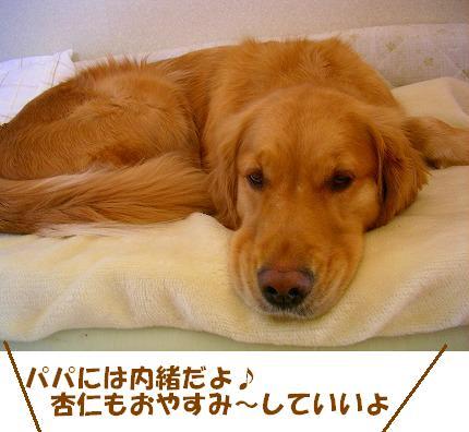 SANY0024_20090123172030.jpg