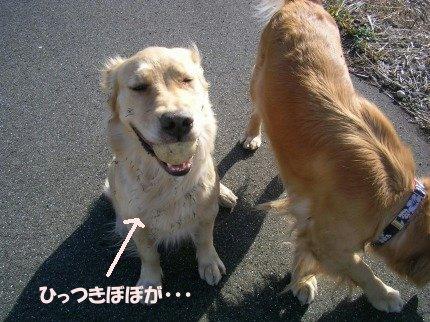 SANY0024_20090209001651.jpg