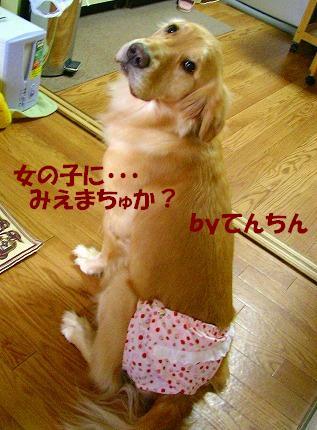SANY0025_20081221223036.jpg