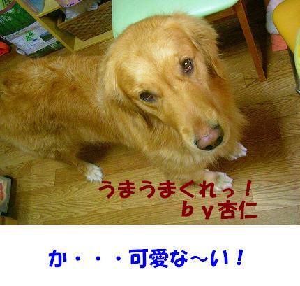 SANY0025_20090111105918.jpg