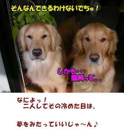 SANY0025_20090318194227.jpg