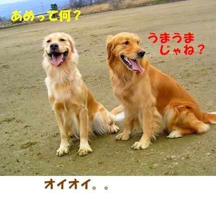 SANY0026_20090121222508.jpg