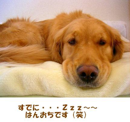SANY0026_20090123172038.jpg