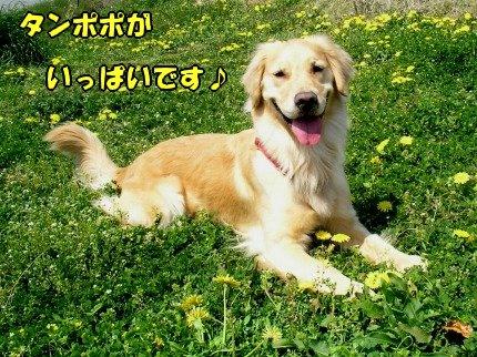 SANY0026_20090410200835.jpg