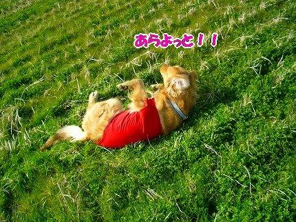 SANY0027_20090301220546.jpg